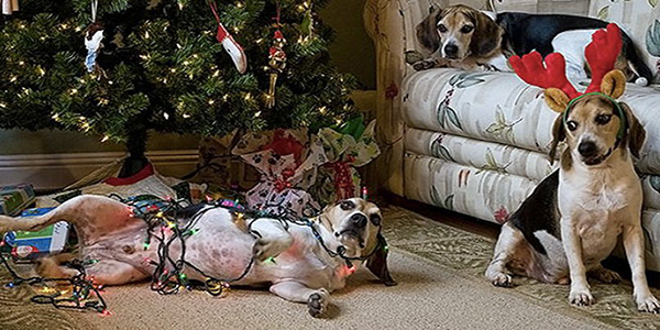 funny-beagles-christmas-tree