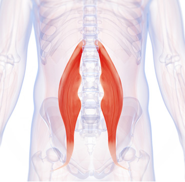 Have Hip Pain? This Often-Neglected Muscle Group Can Cause Runners a ...